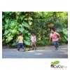 PlanToys - Arrastre Cocodrilo Arcoiris, juguete de madera